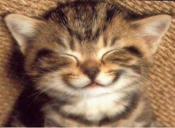 como-fazer-o-teu-gato-feliz
