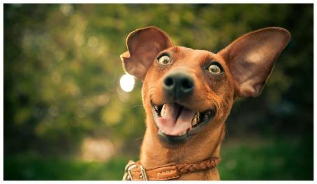 como-fazer-seu-cachorro-feliz-2